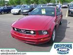 2009 Ford Mustang V6 2dr Coupe in Okotoks, Alberta