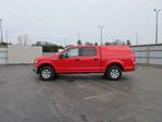 2015 Ford F-150 XLT CREW in Cayuga, Ontario