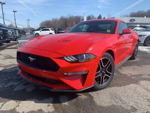 2019 FORD Mustang EcoBoost in Ottawa, Ontario